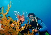 TOURISTS IN Scuba Diving in Cham Island Tour (for certified divers)